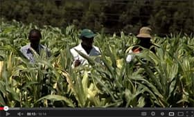 Maize lethal necrosis disease: A new challenge for maize scientists in eastern Africa