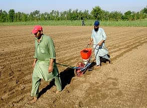 Farmer Jalees Ahmed planting maize with a push row planter in Nowshera, Pakistan. Photo: Ansaar Ahmed
