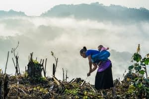 GENNOVATE research reveals women-headed households often experience high rates of poverty reduction. Photo: CIMMYT/P. Lowe