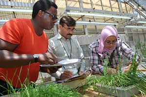 Participants in CIMMYT's 2011 advanced-level Wheat Improvement and Pathology training program examine and take notes on seedling infection type in response to wheat leaf rust, stripe rust and stem rust. (Photo: X. Fonseca/CIMMYT)