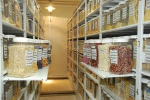 Maize seed samples in CIMMYT's seed bank. CIMMYT/file