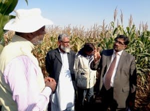 While visiting AIP maize trials, Dr. Muhammad Azeem Khan, NARC Director General, discusses NARC's seed road map. Photo: Salman Saleem/CIMMYT.