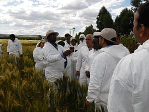 CIMMYT scientist Mandeep Randhawa explains trainees early booting stage for stem rust inoculation. (Photo: KALRO)