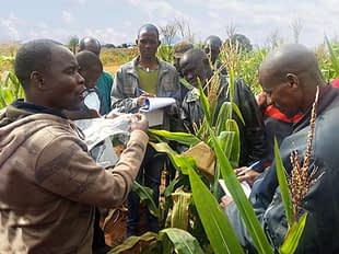Maize technicians received a training course in Mozambique.