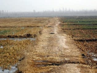 A demonstration site during winter irrigation shows a conservation agriculture (CA) field (left) and conventionally (CK) planted field (right). The CA field was planted on 14 October while the CK field was planted at the end of September.