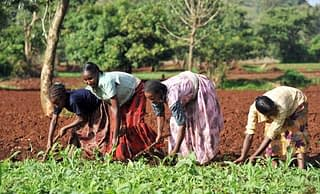 cimmyt-maize-farmers