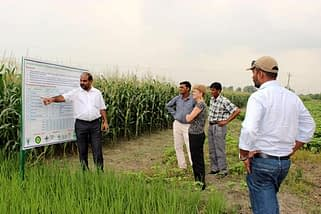 M.L. Jat shows resilient cropping system options for eastern Indo-Gangetic plains at BISA farm, Pusa. Photo: Deepak Kumar Singh/CIMMYT