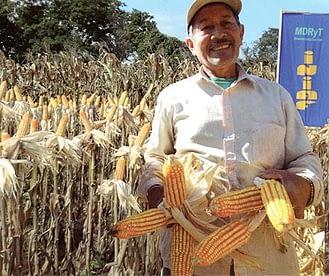 maize-hybrids1