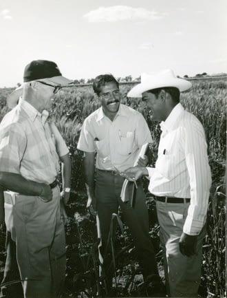 From left to right: Norman Borlaug, Mohan Kohli and Sanjaya Rajaram at Centro de Investigaciones Agricolas del Noreste (CIANO), Sonora, Mexico, in 1973. (Photo: CIMMYT)