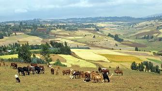 Farming-systems3