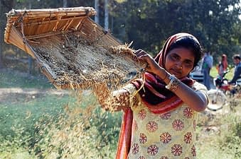 Climate change is likely to have a huge impact on cereal farmers in India. Photo: Emma Quilligan/CIMMYT