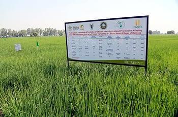 CIMMYT-CCAFS climate-smart village site in Haryana, India. Photo: CIMMYT/CCAF