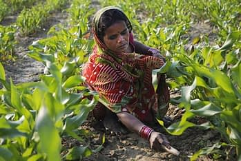 Of the 1 billion food insecure people in the world, more than 30 percent are in South Asia. By 2030 it will be one of the most vulnerable regions to climate change-related food shortages, with maize, rice and wheat prices predicted to double in the next 20 years. Photo: M. DeFreese/CIMMYT