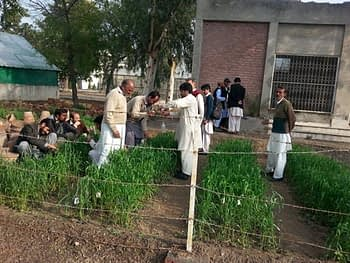 Hands-on field work. Photo: Monsif-ur-Rehman/CIMMYT
