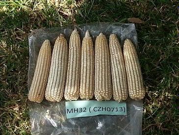 Malawi-hybrid-release
