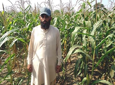 Maize crop planted with a push row planter. Photo: Ansaar Ahmed