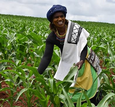 Nontoko Mgudlwa, a smallholder farmer who planted TELA maize for the first time since its release in South Africa. Photo: B.Wawa/CIMMYT