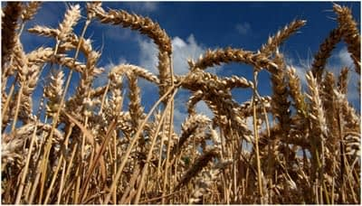 wheat-food-security