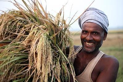 Srikanth Kolari/CIMMYT
