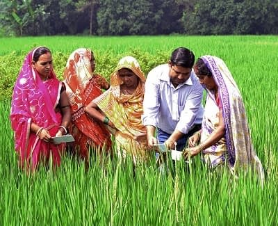Farmers in a climate-smart village in Bihar use the leaf colour chart to judge the nitrogen content required for crops. Photo: V.Reddy, ViDocs, CCAFS.