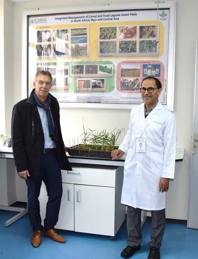 Martin Kropff, CIMMYT director general (left) and Mustapha El-Bouhssini, ICARDA entomologist, in that center's lab at Rabat, Morocco.