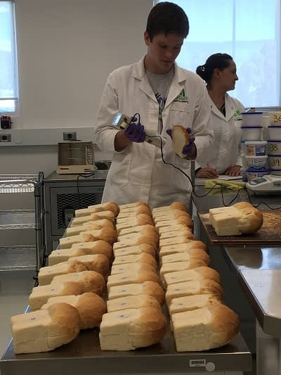 Jonathan Poole tests the color of bread samples in CIMMYT's wheat quality lab. Photo: CIMMYT/L.Strugnell