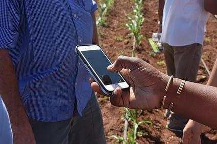 Seed Assure app testing in the field in Kiboko, Kenya. Photo credit: CIMMYT.