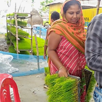 Hosneara Bibi works at the rice seedling enterprise she and her fellow self-help group members started. (Photo: SSCOP)