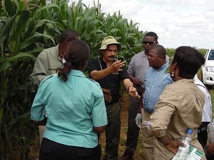 Participants recieve instructions from L.M Suresh, a maize pathologist at CIMMYT, during the MLN surveillance and diagnostic workshop. Photo: D.Hodson/CIMMYT