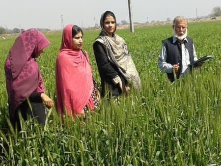 CIMMYT and the Pakistan Agricultural Research Council are set to hold a seminar on women and youth in wheat-based farming systems on March 8. Photo: CIMMYT archives