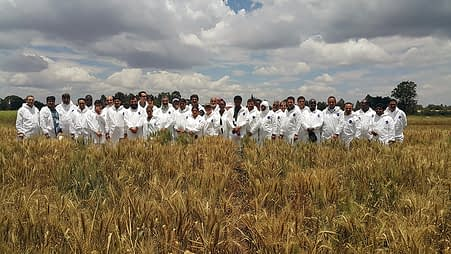 Field screening activities with participants at KALRO, Njoro. Photo: Anthony Kibet.