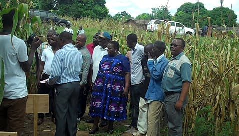 Members of the Malawi Parliamentary Committee on Agriculture and Food Security with smallholder farmers and extension workers admiring some of the drought tolerant maize varieties in Mangochi. CIMMYT/ Willie Kalumula