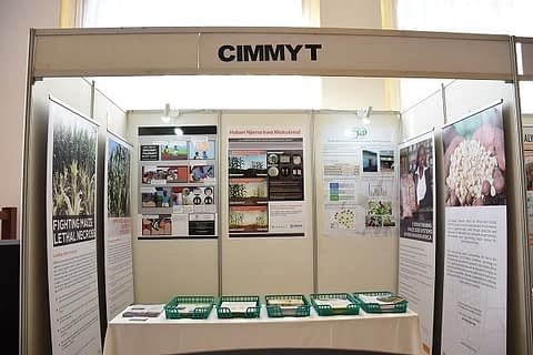 The CIMMYT booth at AFSC. Photo: K. Kaimenyi/CIMMYT
