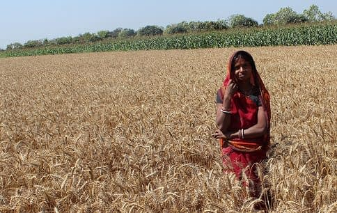 India is one of the world's largest contributors to global warming, but simple changes in farm management can drastically cut emissions while meeting food demand.