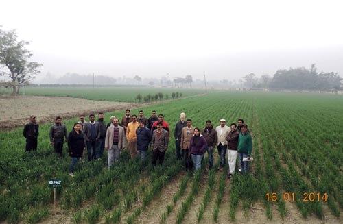 Participants gather in Bihar, India. Photo: Manish Kumar/CIMMYT