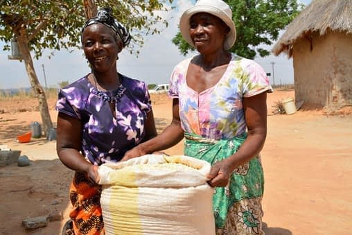 Appollonia Marutsvaka and Alice Chipato of Zaka District in Zimbabwe. If widely adopted, drought- and heat-tolerant maize varieties could help farmers cope with drought and heat stresses. Photo: J. Siamachira/CIMMYT