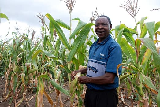 """""""The rain is very little here, but even with a little rain, this seed does well,"""" says a smallholder farmer Philip Ngolania, in south-central Kenya, referring to a drought-tolerant maize variety he planted during the 2015 crop season. """"Without this seed, I would have nothing. Nothing, like my neighbours who did not use the variety."""" Photo: Johnson Siamachira/CIMMYT"""