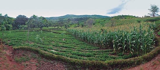 In 2006, 5 farmers were practicing conservation agriculture in Balaka District, Southern Malawi. Today, there are over 2,200. Photo: T. Samson/CIMMYT