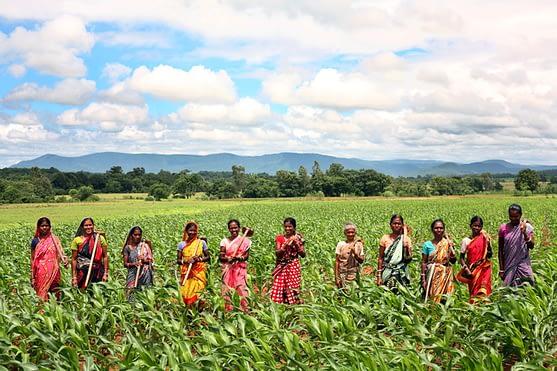 Women farmers in the plateau region of Odisha play an integral role in increasing maize productivity. Photo: Srikanth Kolari/CIMMYT