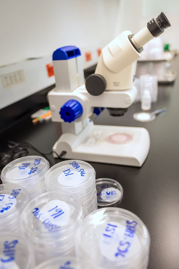 Petri dishes and a microscope in Amos Alakonya's lab. (Photo: Eleusis Llanderal/CIMMYT)