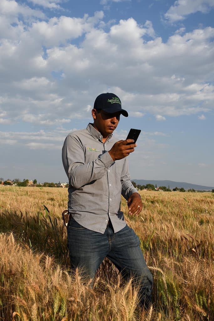 A farmer in Mexico uses the AgroTutor application in the field. (Photo: Francisco Alarcón/CIMMYT)