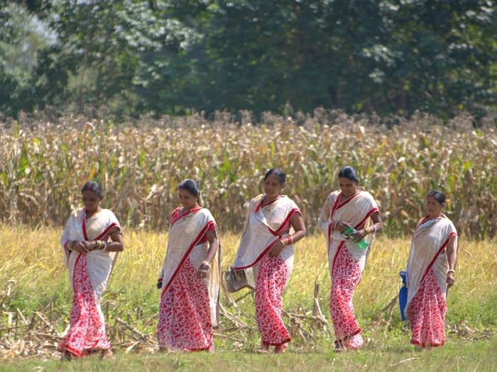 Women from the Baitarani Maa Shibani women's self-help group who decided to take on maize cultivation. Photo: D. Vedachalam/CIMMYT.