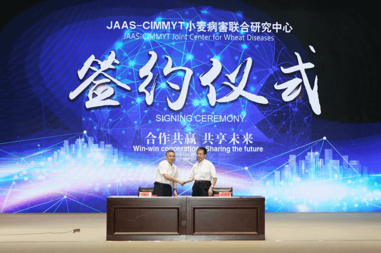 CIMMYT and JAAS representatives signed the agreement to establish a screening facility for Fusarium head blight in Nanjing, China.