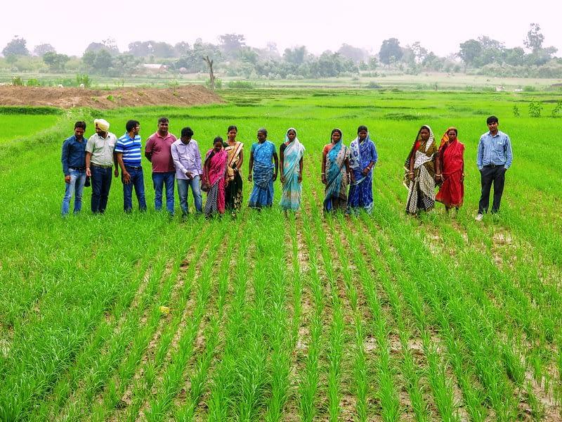 Wheat farmers during a field day in Odisha, India. (Photo: Wasim Iftikar/CSISA)