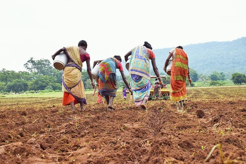 Women applying required fertilizer along the tracks of seed drill. (Photo: Wasim Iftikar)