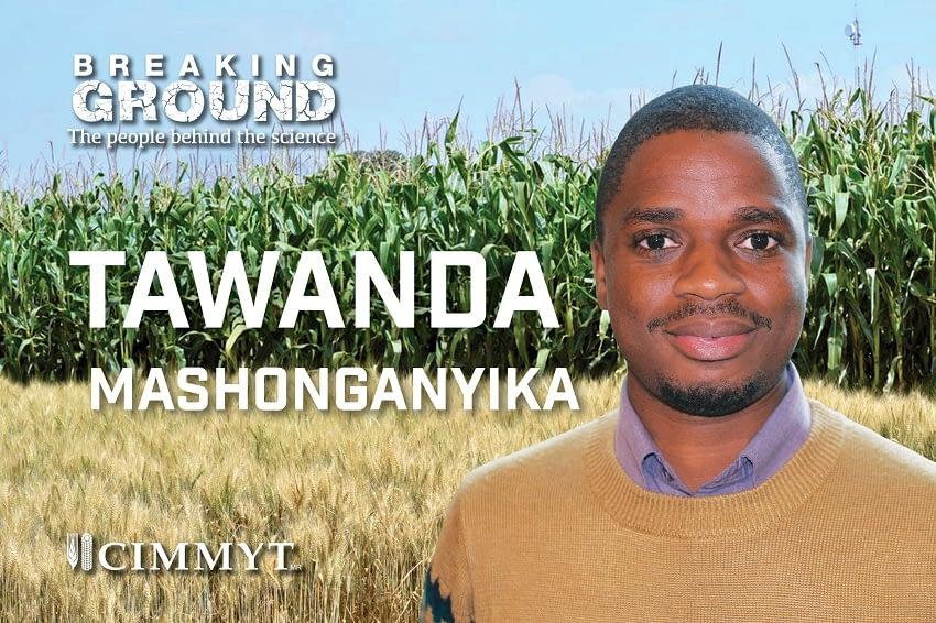 Tawanda Mashonganyika
