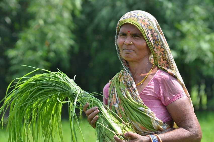 A woman in a climate-smart village in Bihar, India. (Photo: V.Reddy/ViDocs/CCAFS)