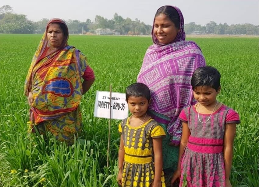 Hosneara Bibi (top-right) shows her zero-tillage wheat crop. (Photo: SSCOP)