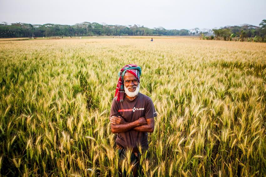Tara Miah, a farmer from Rajguru in Rahamanbari union, Barisal, Bangladesh. (Photo: Ranak Martin/CIMMYT)