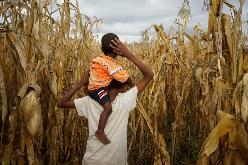A farmer's son carries his brother through the family field, planted with BH 546 DT maize, in the village of Lobu Koromo, in Ethiopia's Hawassa Zuria district. (Photo: P. Lowe/CIMMYT)